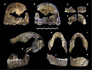 Homo_naledi_holotype_specimen_(DH1)